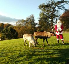 Come and see #Santa and his #reindeers this weekend at Erddig. Also live music and Christmas Market. #NTChristmas