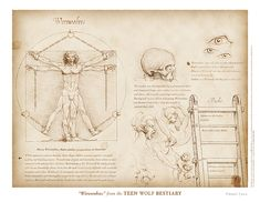"""""""Werewolves"""" (spread) from the Teen Wolf Bestiary by Swann Smith. Art prints starting at US$20."""