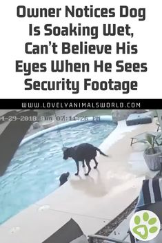 Owner Notices Dog Is Soaking Wet Cant Believe His Eyes When He Sees Security Footage Chihuahua Puppies For Sale, Dogs And Puppies, Animals And Pets, Cute Animals, Funny Animals, Soaking Wet, English Mastiff, Dog Stories, Dog Rules