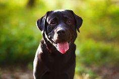 ¿Alguna vez te ha pasado que de repente tu perro se te queda mirando permanentemente?