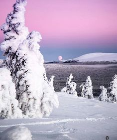 Polar night at Ylläs, Lapland, Finland. Picture by Winter Magic, Winter Snow, Winter White, Winter Photography, Landscape Photography, Paradise Pictures, Polar Night, Lapland Finland, Light In