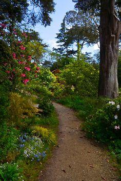 ~~In the Rhododendron Garden | Golden Gate Park, San Francisco, California by Barbara Brown~~
