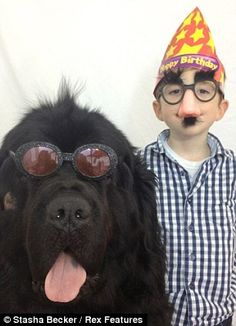 julian max stasha | Julian Becker and his 165 pound pet Max, the shaggy Newfoundland that ...