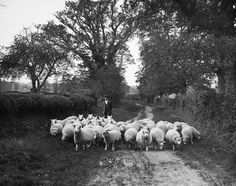 Catch a glimpse of England in a byegone time through these photos of rural life from Reading's Museum of English Rural Life and see how life has changed. Best Uk Beaches, Uk Rail, Visit Britain, Country House Hotels, Uk Holidays, Cool Countries, English Countryside, Back To Nature, Great Britain