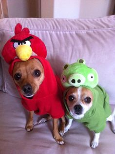 Angry Birds Dogs!!! Handmade for halloween by repurposedstudio.com best dog & 8 best Disney Dog Hallowen images on Pinterest | Animal costumes ...