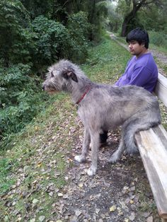 Problem number two when you're an Irish wolfhound : finding a seat your size