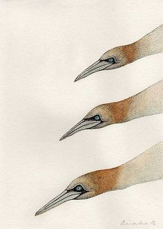 Morus x 3 (2016) Pen & Watercolour with gloss finish 210mm x 297mm by Anna Vialle Print £30.00