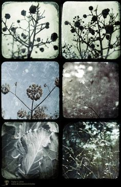 Set of 6 -SURFACE Fine Art Photography series – nature subjects