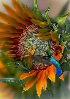 The bird nearly gets lost in the flower