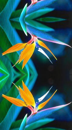 ENLARGED BIRD OF PARADISE fabric by bluevelvet on Spoonflower - custom fabric