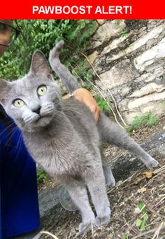 Is this your lost pet? Found in Kansas City, MO 64111. Please spread the word so we can find the owner!  Has front claws, extremely friendly, I'm assuming a female because I didn't see balls, not microchipped  Near Baltimore Ave & W 37 St