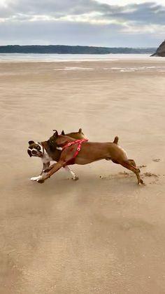 Henry at full stretch as he runs beside Ike in the vast empty open beach earlier