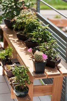 bonsai bench attached to a building bonsai pinterest. Black Bedroom Furniture Sets. Home Design Ideas