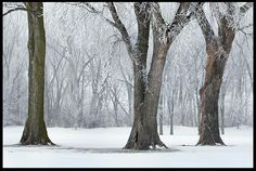 """Visual #BibleVerseoftheDay: Psalm 147:16b, 17 and Trees Covered with Frost and Snow, Bellevue, Nebraska and. """"He scatters the frost like ashes.…"""" CLICK THE PHOTO to be blessed with the complete passage. http://visualverse.thecreationspeaks.com/scatters-frost-like-ashes/"""