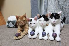 Cat_Four in a Row