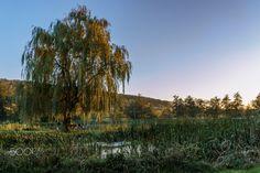 evening - green autumn