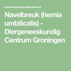 Navelbreuk (hernia umbilicalis) - Diergeneeskundig Centrum Groningen
