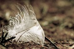 She did not leave without a trace. Nobody looked twice at the feather, but I knew what it was.