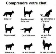 Quote of the day - French proverb - Cats/Katzen/Chats/Gatos - Chat Cool Cats, I Love Cats, Crazy Cat Lady, Crazy Cats, Gatos Cool, Cat Behavior, All About Cats, Fun Facts About Cats, Cat Facts