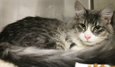 OUT OF TIME!!  NAME: Solomon  ANIMAL ID: 24671306 BREED: DLH  SEX: Neutered Male  EST. AGE: 7 mos  Est Weight: 8.7 lbs Health:  Temperament: friendly ADDITIONAL INFO: O/S  RESCUE PULL FEE: $39