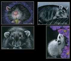 All rights for reproducing this image remain with the artist Irina Garmashova. Signed and numbered by the Artist. Rats Mignon, Fancy Rat, Cute Rats, Beautiful Artwork, Cool Art, Awesome Art, Fine Art Prints, Photos, Watercolor