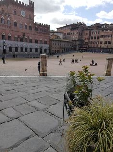 Siena Siena, Louvre, Italy, Building, Travel, Italia, Viajes, Buildings, Destinations