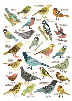 British garden birds illustrated by Kate Sutton.