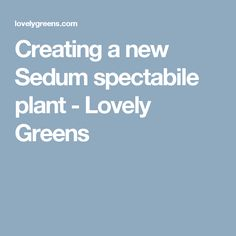 Creating a new Sedum spectabile plant - Lovely Greens