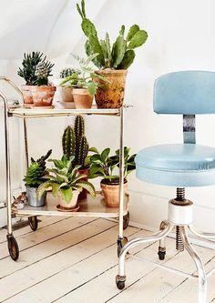 Succulent & cacti wagon