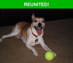 Great news! Happy to report that Rocco has been reunited and is now home safe and sound! :)