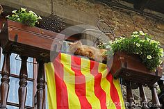 The Cat Lies On A Balcony With White Petunias And Catalan Flag In Rupit - Download From Over 58 Million High Quality Stock Photos, Images, Vectors. Sign up for FREE today. Image: 86795823