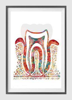 Sección de acuarela impresión cartel molar diente por MimiPrints