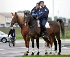 Bitless French Police Riding Helmets, Police, Horses, French, Hats, Animals, Animais, Animales, French Language