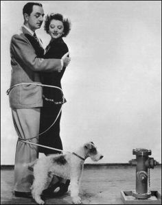 from the Thin Man movies. best behaved wire fox terrier in history. I just love Asta!