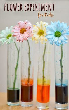 Experimento para niños, de forma divertida y mágica los pequeños aprenderán sobre flores, experimentando! Flower Experiment for Kids- a fun & magical way for kids to learn about flowers and how they thrive {A great experiment for Spring} #flowers #kids #fun