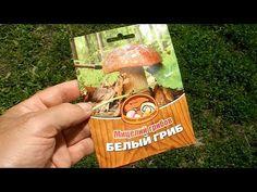 Growing Mushrooms, Wild Mushrooms, Stuffed Mushrooms, Garden Projects, Garden Tools, Mushroom Cultivation, Plant Nursery, Diy Garden Decor, Fruit Trees
