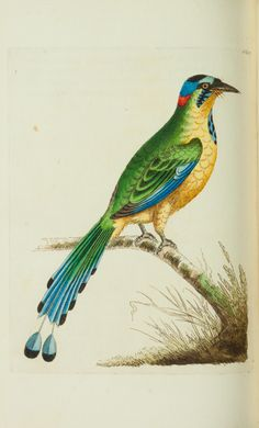 v.20 - The naturalist's miscellany, or Coloured figures of natural objects - Biodiversity Heritage Library