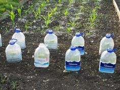 they triple the growth compared to uncovered plants.  Remove lids for air & watering, handles make it easy to lift off.