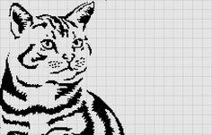 Tabby cat - Top half