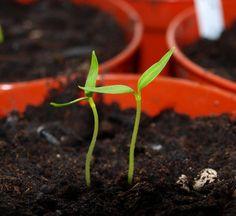 start seedlings inside