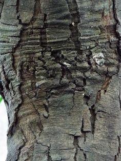 Tree bark...