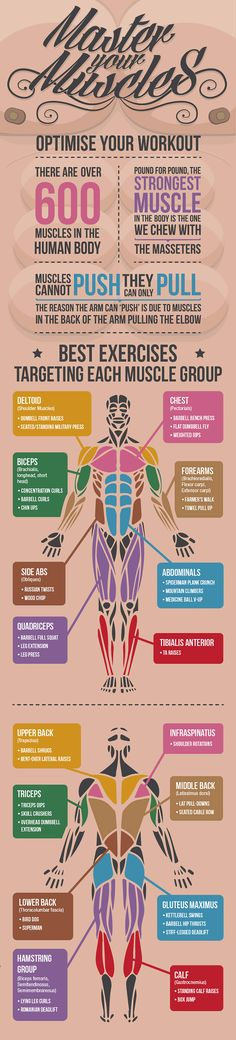 What are the best exercise for each muscle group? Check them out here #running #muscles #gym