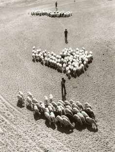 Fulvio Roiter - Andalusia, 1955 - to me the middle flock looks like a heart!