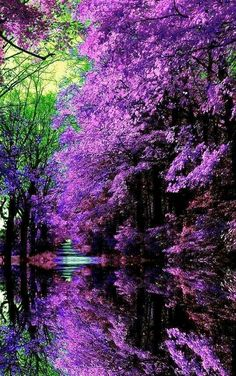 It's a beautiful world! A Japanese Garden Beautiful World, Beautiful Images, Beautiful Gardens, Beautiful Flowers, Beautiful Gorgeous, Beautiful Scenery, Elegant Flowers, Pretty Pictures, Cool Photos