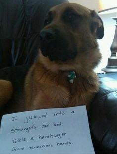 dog shaming :)
