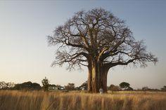 Erlebnisreiche Fußsafari im Norden Tansanias Safari, Mount Kilimanjaro, Impala, Tanzania, Lodges, Resorts, Country Roads, Camping, Tours