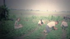 ARKANSAS, USA - 1965: Family hand picking strawberry crops on hands and knees. http://www.pond5.com/stock-footage/51797258?ref=StockFilm keywords:family, pick, harvest, strawberry, crops, fields, work, community, 1965, arkansas, usa, farm, retro, vintage, classic, 1960s, old, historic, political, advertisement, personal, reality, romance, cinematography, golden age, Americana, lifestyle, leisure, truth, honest, projector, footage, amateur, homemade, grainy, archive, nostalgia, memories…