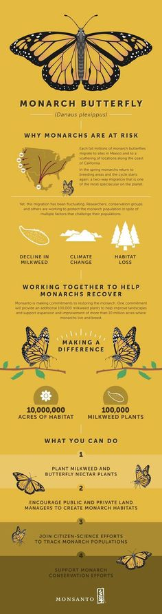 Monsanto (really?) Addressing the decline of monarch butterflies is something that a lot of us could do something about. This gives an idea on the issue & ways to make a difference.