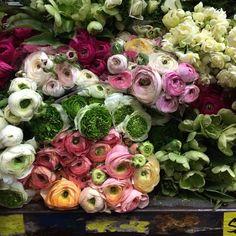 Sydney Flower Markets