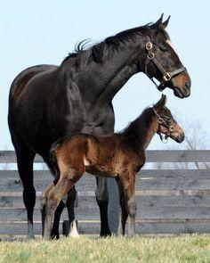 Love this pic of Zenyatta and her baby boy